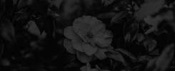 cropps album final4